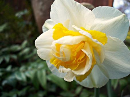 spring31